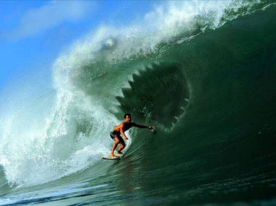 http://surfnteknik.free.fr/requin.JPG